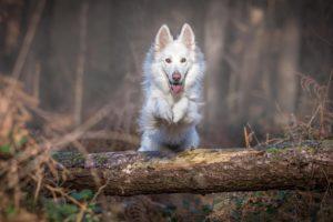 Motivation - den inneren Schweinehund übers Stöckchen springen lassen: Hund springt über umgefallenen Baum