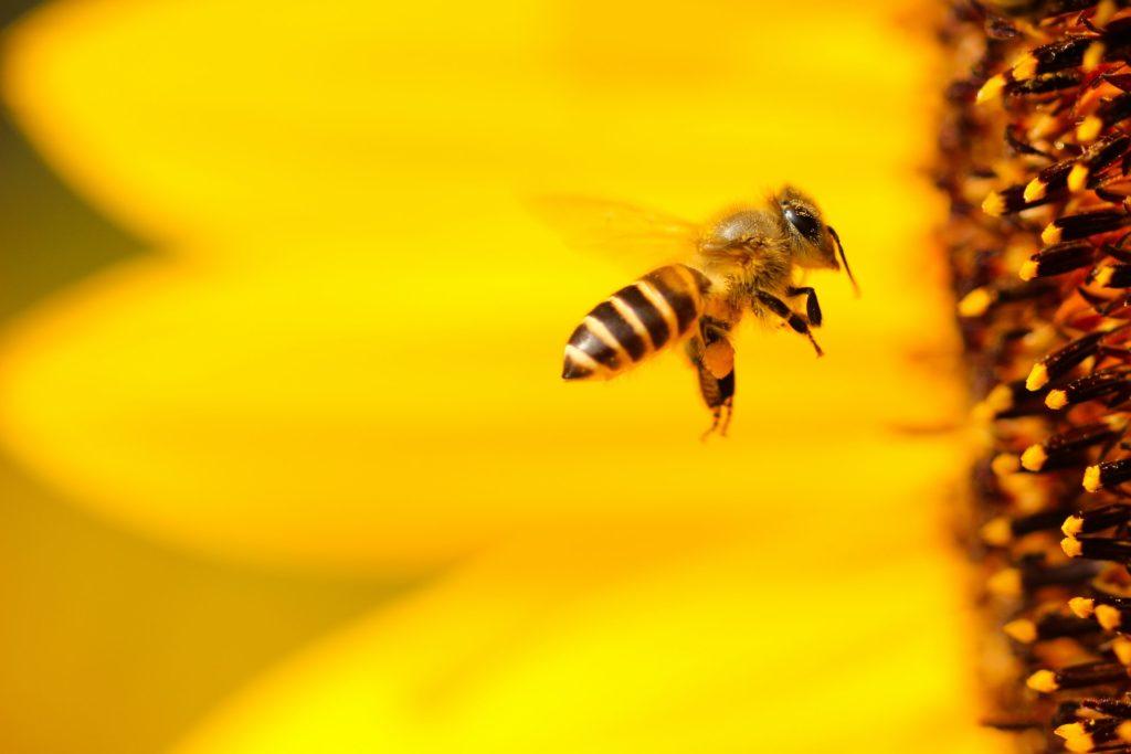 So findest du aus einer Blockade wieder in den Arbeitsfluss; Biene fliegt schnell auf Blüte zu